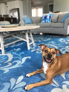 anna maria pet friendly vacation rentals
