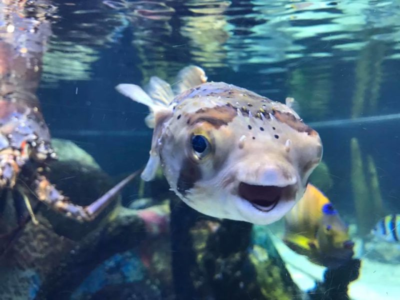 Close up of fish at Mote Marine Aquarium in Sarasota, FL